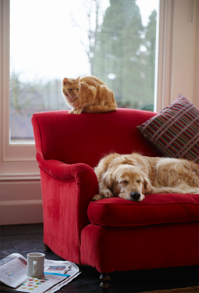 Ginger cat and golden retriever dog relaxing on red chair.