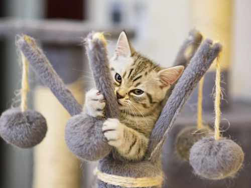 cat playing with a scratching post