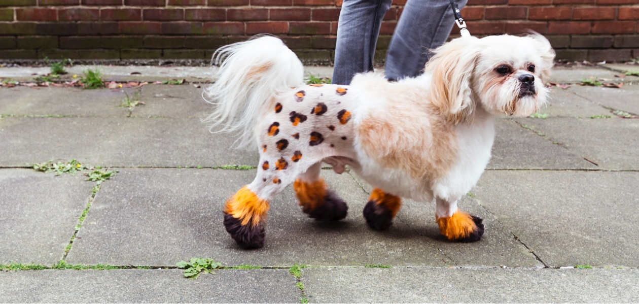 small dog with painted body