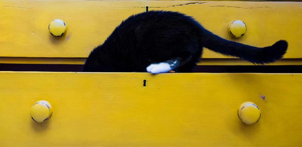 black cat climbing into a yellow drawer