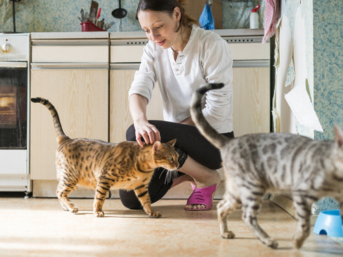 lady with cats in kitchen